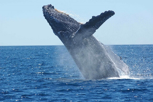 International Gray Whale Festival