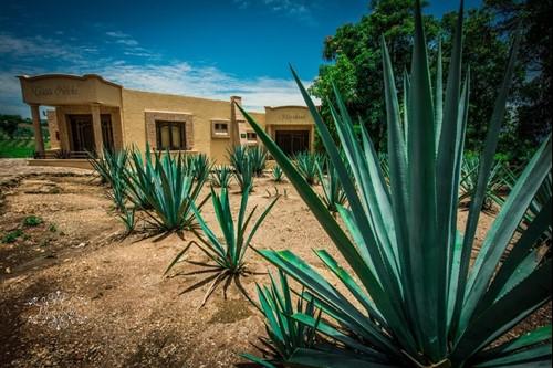 Pueblo Tequila en Jalisco